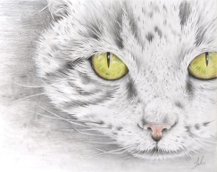 Dessin Chat